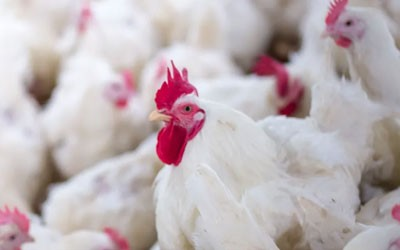 Poultry Products Suppliers