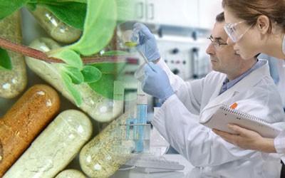 ayurvedic capsules manufacturers