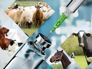 Veterinary Injections Manufacturers in Ambala