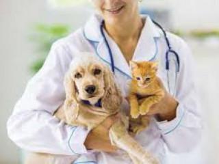 Veterinary Medicine Franchise Company