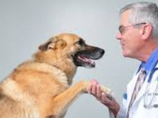 Top Veterinary PCD Companies
