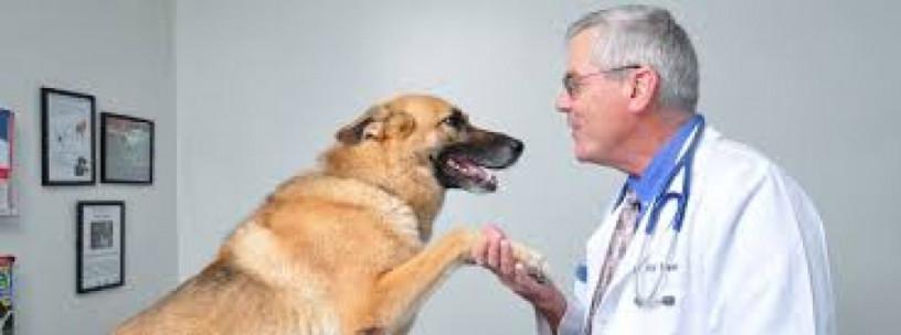 Top Veterinary PCD Companies 1