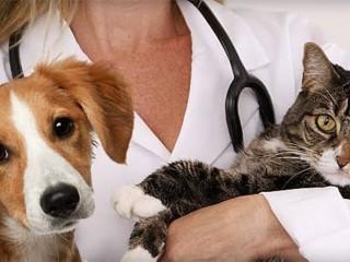 Veterinary Pharma Franchise Company
