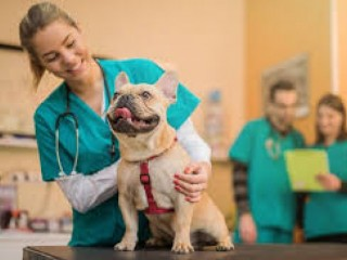 Veterinary Pharma Franchise Company