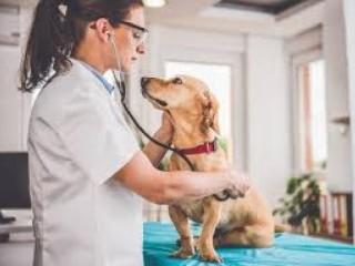 Haryana Based Veterinary PCD Company
